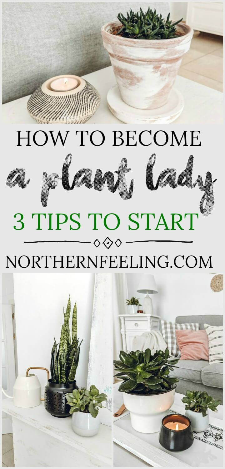 how I became a plant lady & 3 tips to start // northernfeeling.com